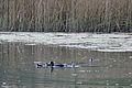 2014-04-13 13-37-16 Switzerland Kanton Schaffhausen Schaffhausen Schaffhausen-Herblingen.JPG