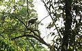 2016-04-03 Chitwan National Park, Nepal. 5889.jpg