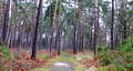 2018-12-22-December-watercolors.-Hike-to-the-Ratingen-forest. File-16.png