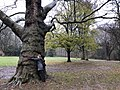 2020-12-12-Hike-to-Rheydt-Palace-and-its-surroundings.-Foto-42.jpg