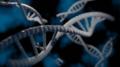 3D DNA.png