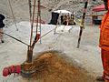 480382main miners2.jpg