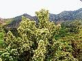 A@a St.Cristine Chapel - Agia Paraskevi area Askas - panoramio (1).jpg