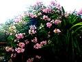A@a part of Andr. garden - panoramio (8).jpg