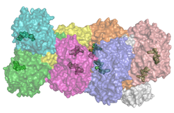 Aldehyd-Dehydrogenase 2