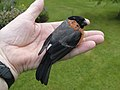 A Bird in the Hand - geograph.org.uk - 1623557.jpg
