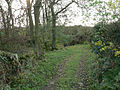 A Track Towards Swarble Hill - geograph.org.uk - 287651.jpg