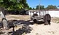 A bullock cart of 1836 displayed in the backyard.jpg