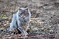 A cat in Krasnodar-2010-03-27.jpg