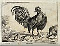 A cockerel surrounded by sparrows and a hen pecking the grou Wellcome V0022136.jpg