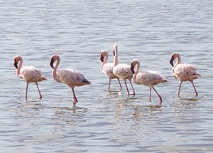 Serengeti National Park - A group of flamingo in a small lake inside Serengeti plain