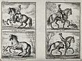 A horseman showing three different gaits with his horse, inc Wellcome V0021795.jpg