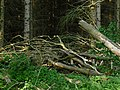 A pile of dead branches in the moorlands of Fochterloerveen; North-Netherlands, spring of 2012.jpg