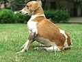 A type of dog.jpg