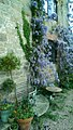 Abbey Farmhouse (1).jpg