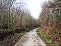 Access Road through Bedgebury Forest - geograph.org.uk - 1195988.jpg