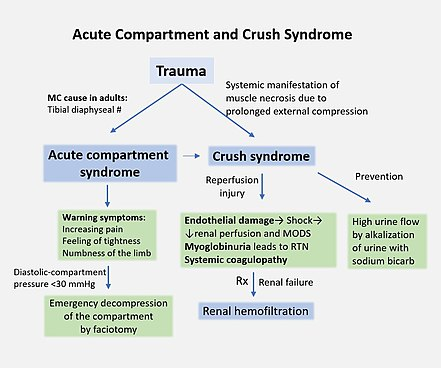 Crush Syndrome Wikipedia