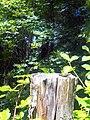 Al margine del bosco.jpg