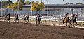 Alberta Breeders' Fall Classic 2014 - Horse Racing (15117958700).jpg