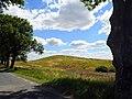 Alinowe Wzgórze - panoramio.jpg