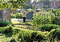 Allotments, Abbotts Barton - geograph.org.uk - 982355.jpg