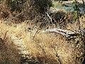 Am. River Fair Oaks 594 - panoramio.jpg
