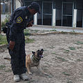 An Iraqi police officer with the major terrorism K-9 unit instructs his dog during obstacle course training at Contingency Operating Site Diamondback in Mosul, Ninevah province, Iraq, May 23, 2011 110523-A-RH393-088.jpg
