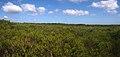 Anice Falls Track - panoramio (1).jpg