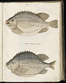 Animal drawings collected by Felix Platter, p1 - (33).jpg