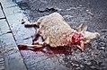 Animal sacrifice at Eid at Adha 8.jpg