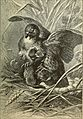 Animals in action; studies and stories of beasts, birds and reptiles; their habits, their homes and their peculiarities (1901) (14568698290).jpg