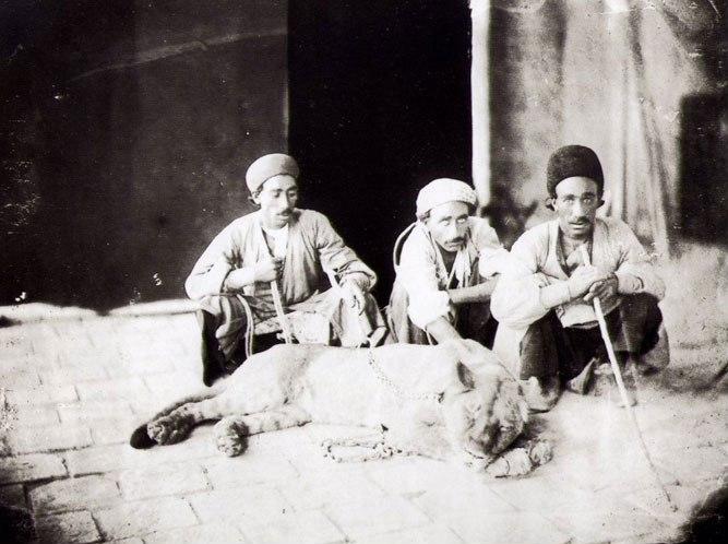 Antoin Sevruguin 7 Men with live lion