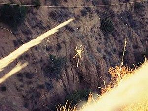Araña en las Barrancas.jpg