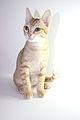 Arabian Mau Kitten.jpg
