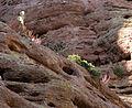 Aravaipa Canyon Wilderness (9415033860).jpg