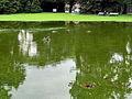 Arboretum - 'Land unter' nach Gewittersturm 2012-07-03 17-29-38 (P7000).JPG
