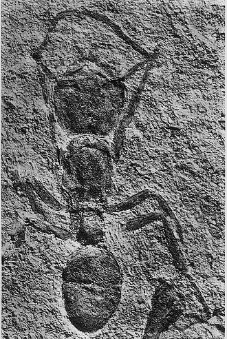 1930 in paleontology - Archiponera wheeleri