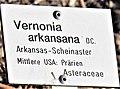 Arkansas-Scheinaster.jpg