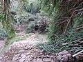 Assut de la presa del Barranc del Gallego (7).jpg