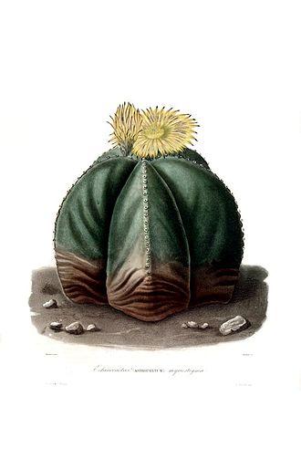 Charles Antoine Lemaire - Astrophytum myriostigma Lem. Iconographie descriptive des cactées