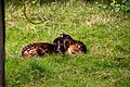 At Chester Zoo 2019 040.jpg