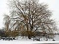Attenborough Nature Reserve Tree at Barton Bridge - geograph.org.uk - 1155522.jpg