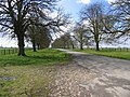 Avenue of trees - geograph.org.uk - 149681.jpg