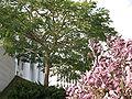 Bahá'í Arc IMG 0876.JPG