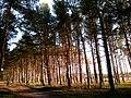 Baltiyskiy rayon, Konigsberg, Kaliningradskaya oblast', Russia - panoramio (54).jpg
