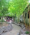 Bamboo grove at Yuyuan Gardens.jpg