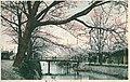 Baum 1913.jpg
