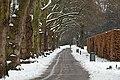 Baumreihe und Weg Zoo KA DSC 6573.jpg