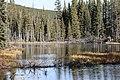 Beaver ponds Kananaskis Alberta Canada (30781316331).jpg