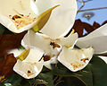 Bee and Magnolia All bee collage.jpg